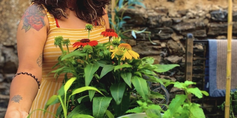 Bodega Garden: A beginners guide to urban farming.