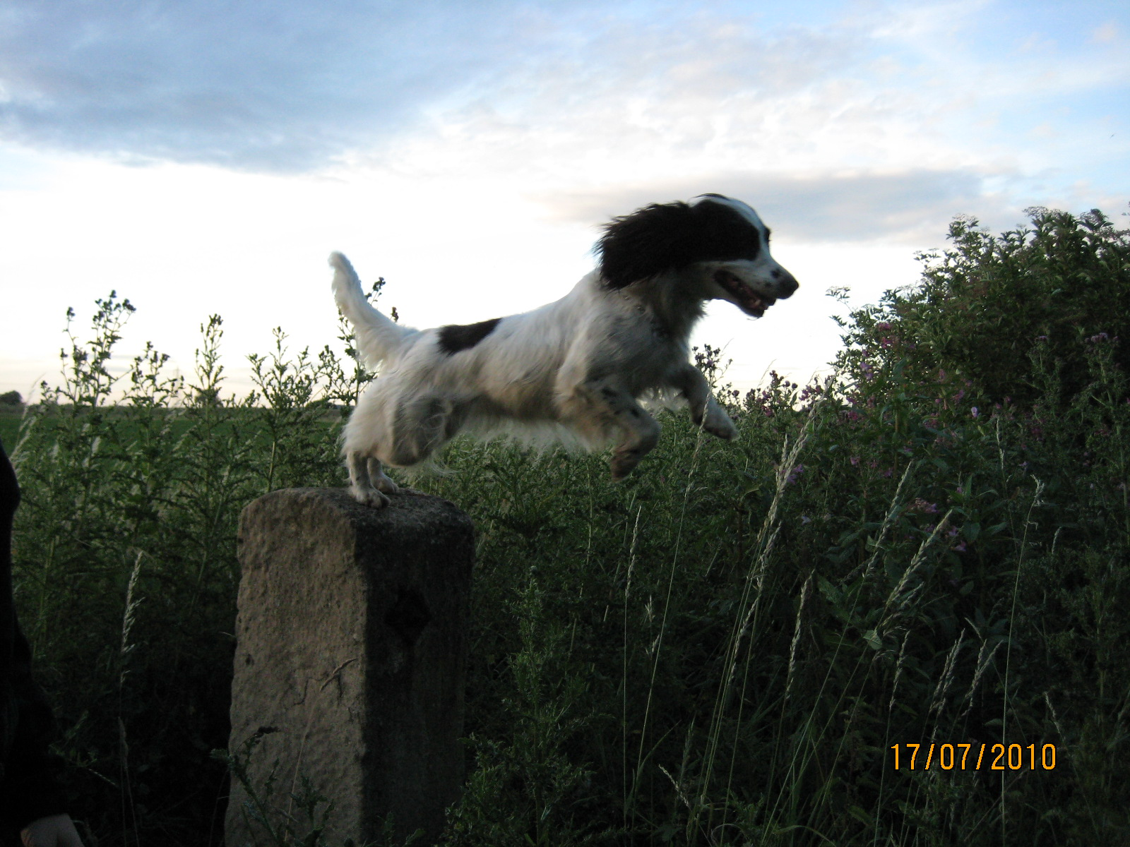 leaping off my perch again