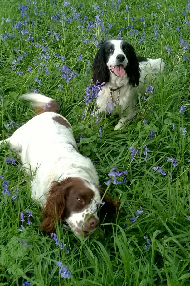 patsy n maisey in the blue bells