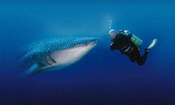 whale-shark-thailand.jpg