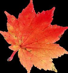 175-1759455_autumn-leaves-clipart-el-oto