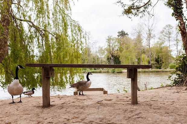 Bench by Worth Park Lake-1.jpg