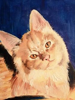Cat portrait in progress - fluffy detail