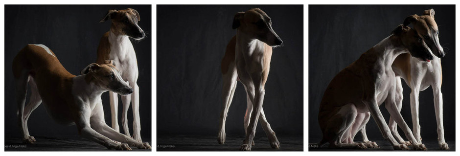 Paul Croes. The real art of taking dogs pictures.