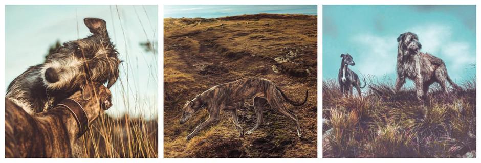 Lindaen. Dogs adventures from Bergen, Norway.