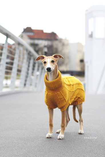 Pullover Sunflower