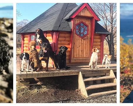 Hundevenn. Dog Center in Arctic Norway.