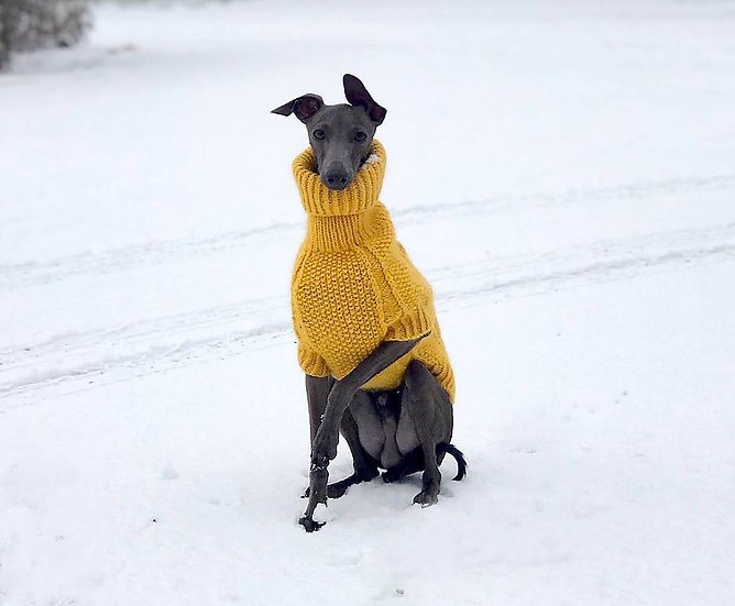 Pullover Sunflower