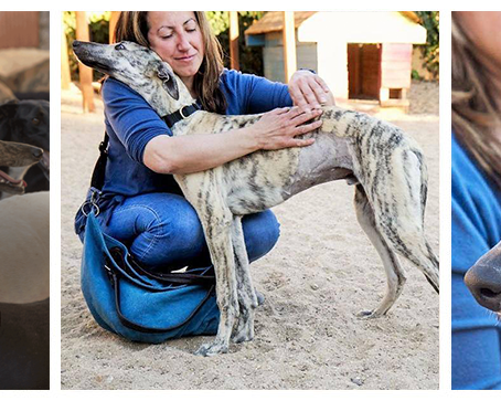 Far From Fear. A German Rescue Galgo Association.