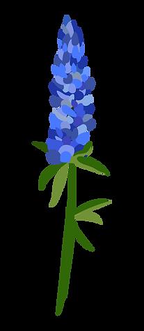 Bluebonnet picture.png