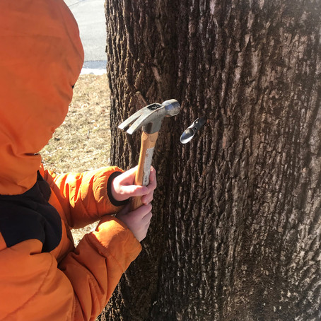 Making Maple Syrup (Or: Unsolicited Parenting Advice)