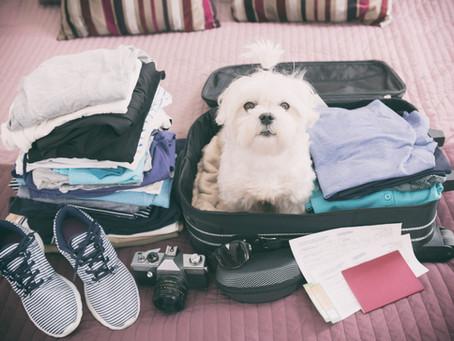 Vai viajar nas férias de julho e não pode levar o seu pet?