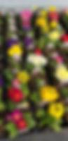 20200416_160933.jpg