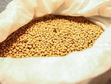 Exportação de soja do Brasil atinge recorde de 16,3 mi t em abril, diz Secex