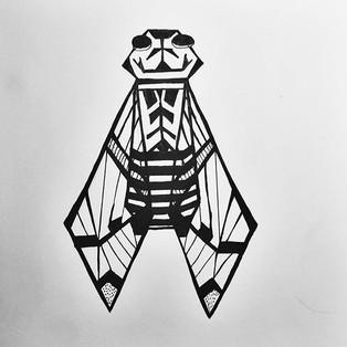 Cicada geometry doodle._._._._.jpg