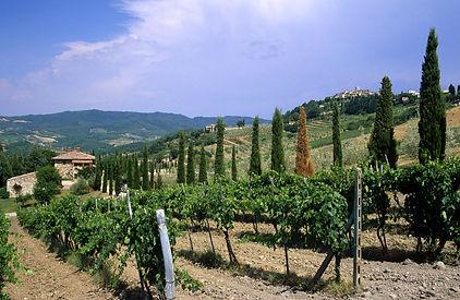 Winetasting Lucca, Wine tasting Tuscany, Wine tasting Chianti