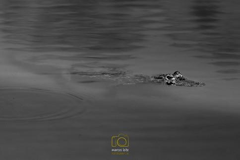 marcos_leite_pantanal-6955.jpg