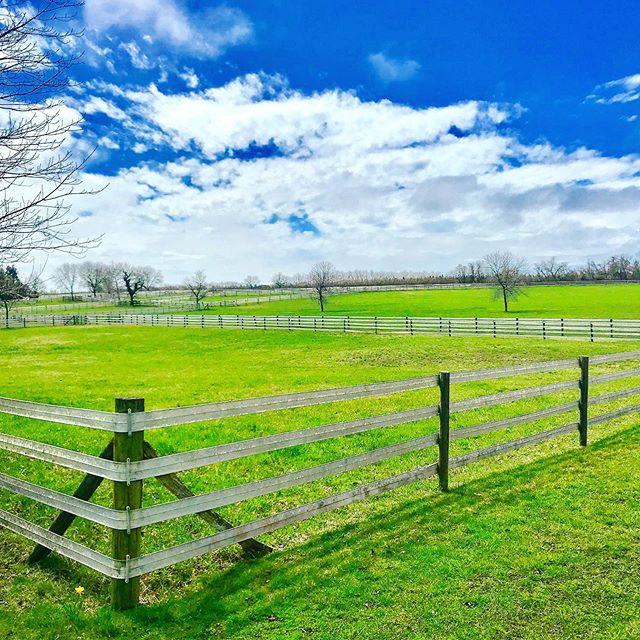 Pasture 🐎  #hamptons #longisland #ny #s
