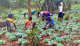 farming-forever-friends-of-uganda.jpg