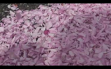 Wilde Blüte