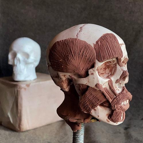 Ecorche Head Sculpting