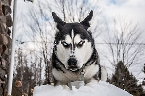 Angry_Dog_Photo_by_Auréanne_Mailhiot.jpg
