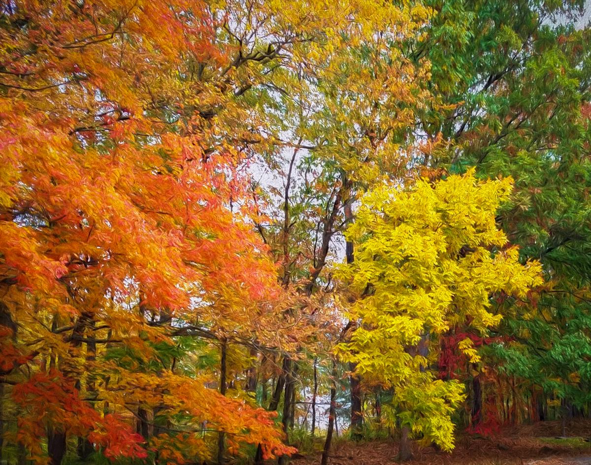 Adjacent autumn colors