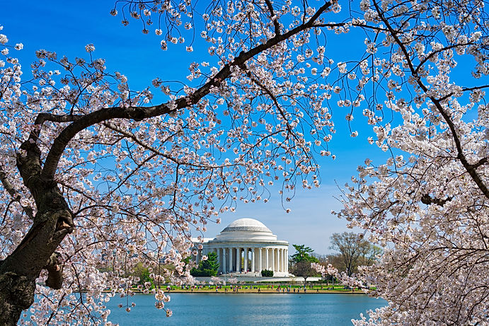 Cherry Blossoms over Tidal Basin and Jefferson Memorial in Washington DC