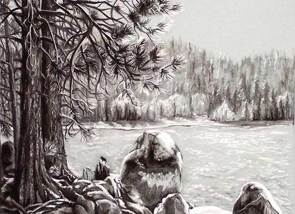 """Cherry Lake Pines"" Drawing"