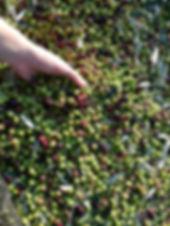 Az. agricola Colli della Regina
