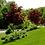 Thumbnail: Клен остролистный Кримсон Сентри (Acer platanoides Crimson Sentry)