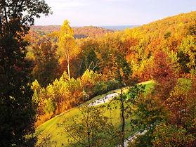 Golf Fall Trees.jpg