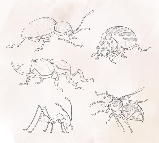 Construction/design sketches of insects with inspiration from Scott Robertson.