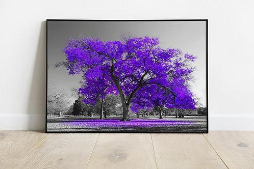 quadro, Fotografia, Árvore Roxa, preto e branco, paisagem, mercado livre, poster, canvas, barato, moderno, sala, quarto