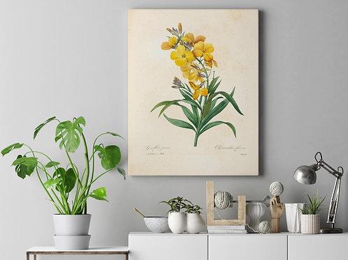 Pierre-Joseph Redouté,botânico,flores,amarela,flor,quadro,poster,gravura, canvas, réplica, reprodução, tela, pintura,fototela