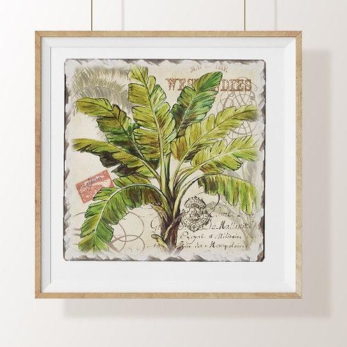 palmeiras, coqueiro, árvore, quadro botânico, botânica, quadro, poster, gravura, reprodução, canvas, replica, releitura, tela