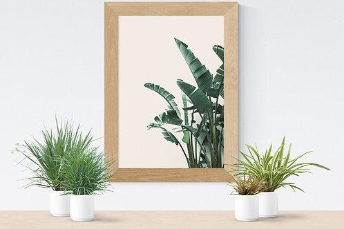 fotografia,Folhas de Palmeira Imperial,folhagem,folha,quadro,canvas,poster,replica,gravura,reprodução,fototela,tela,pintura