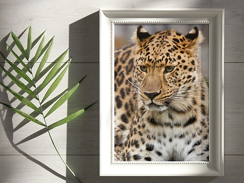 animais,leopardo,animal,onça,felino,poster,gravura,reprodução,réplica,canvas,tela,pintura,fine art