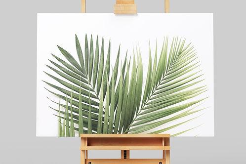 Folhagens,Folha,galho,ramo,Palmeira,fotografia,fototela,poster,gravura,reprodução,réplica,canvas,tela,pintura,fine art