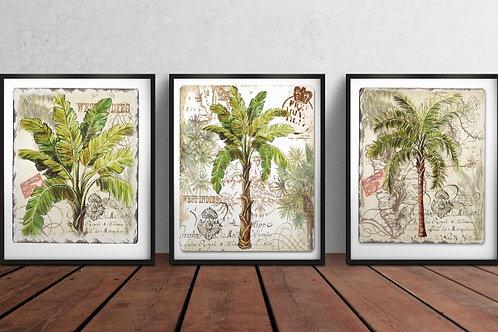 conjunto de quadros, palmeiras, coqueiro, árvore, composição de quadros, poster, gravura, reprodução, canvas, replica, tela