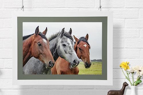 fotografia,animais,animal,cavalos,fototela,baratos,poster,gravura,reprodução,réplica,canvas,tela,pintura,fine art