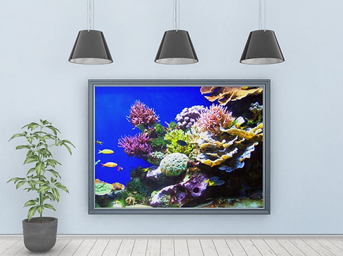 fotografia,Paisagem,fundo do mar,recife,coral,peixes,poster,gravura,reprodução,réplica,canvas,tela,pintura,fine art