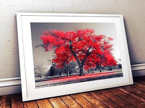 quadro decorativo, Fotografia, Árvore vermelha, preto e branco, paisagem, mercado livre, poster, canvas, barato, moderno,sala