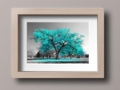 quadro,Fotografia, Árvore Azul Tiffany, preto e branco, paisagem, mercado livre, poster, canvas, barato, moderno, sala,quarto