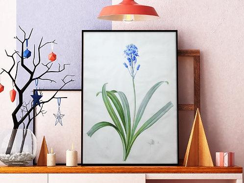 Pierre-Joseph Redouté,botânico,flores,flor,azul,quadro,poster,gravura, canvas, réplica, reprodução, tela, pintura,fototela
