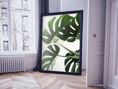 fotografia,Botânico,Costela de Adão,folha,folhagem,poster,gravura,reprodução,réplica,canvas,tela,pintura,fine art