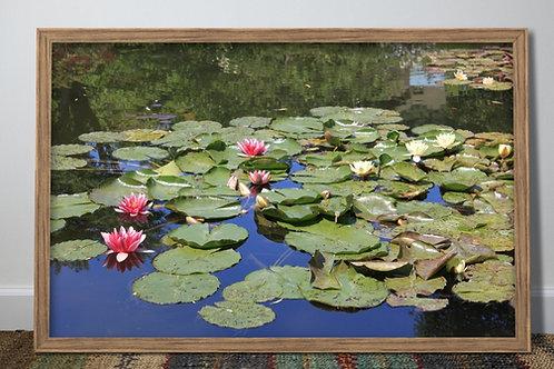 Lagoa,Lírios,Jardim,Monet,fotografia,paisagem,poster,gravura,reprodução,réplica,canvas,tela,pintura,fine art,fototela