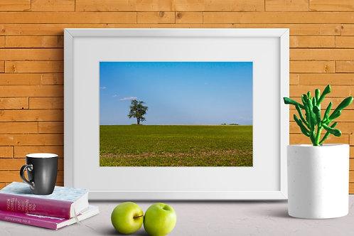 Quadro,árvore,paisagem,fotografia,poster,gravura,reprodução,réplica,canvas,tela,pintura,fine art,fototela