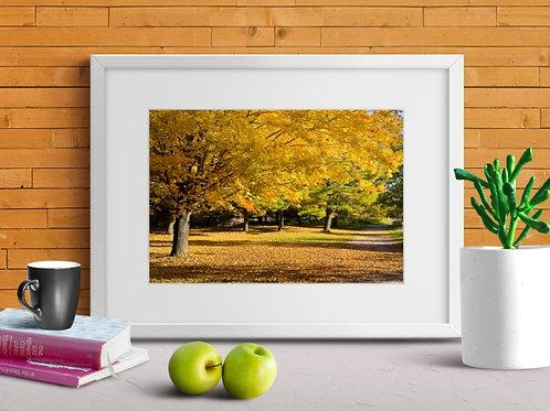 fotografia,Caminho,Árvores,Outono,poster,gravura,reprodução,réplica,canvas,tela,pintura,fine art