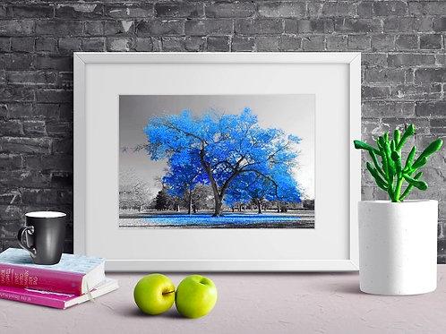 quadro, Fotografia, Árvore Azul Royal, preto e branco, paisagem, mercado livre, poster, canvas, barato, moderno, sala, quarto
